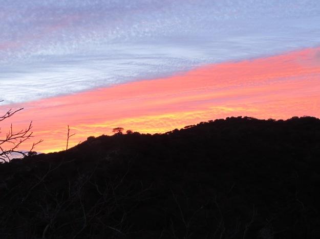 pink sunset1 19-3-16