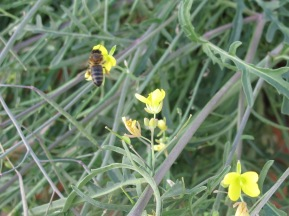 bee on rocket4 23-9-15