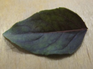 basil leaf, purple