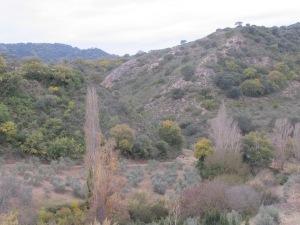12-poplars1