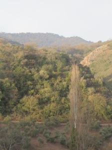 2-poplars