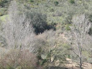 3-poplars-grey1