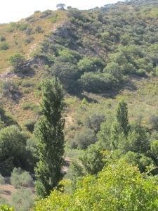 9-the-poplars2