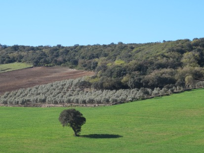 a-lone-tree