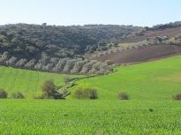 bright-green-field