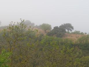 misty-valley11