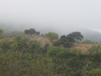 misty-valley3