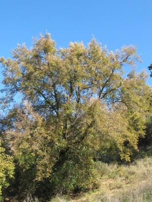 pale-golden-tree-in-winter