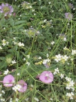 white-and-pink-wildflowers