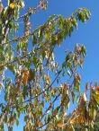 yellow leaves near village2