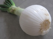 salad-onion