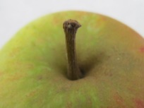 apple-close-up