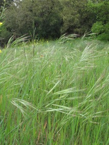 wild-grass-horse-corner1