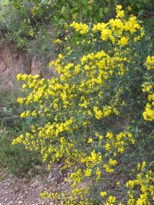 wildflowers-yellow1