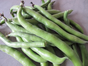 broad beans in pods