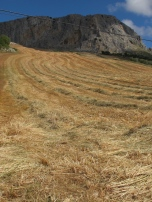 combined field, lines of straw1