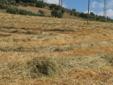combined fields, lines of straw2