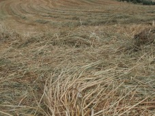 lines of straw1
