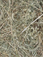 straw, close-up