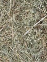 straw, close-up