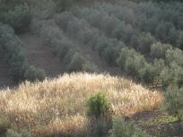 sun on the threshing patch