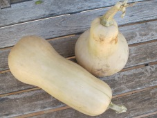 butternut squash from the huerta