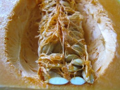 butternut squash, inside1
