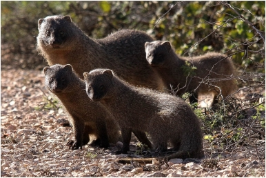 wildlife | Notes on a Spanish Valley