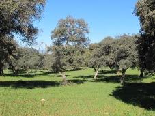 oak woods1
