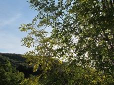 sun through the acacia1