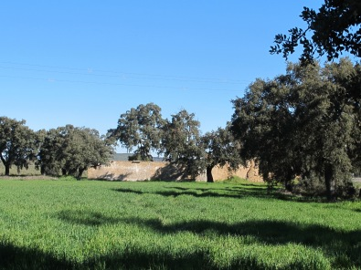 through the olive grove2