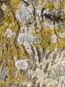 5 bark & lichen - close-up