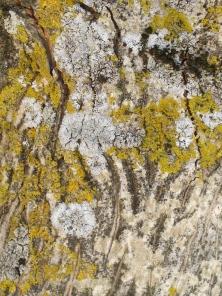 5 bark & lichen - close-up