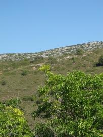 6 walnut tree & blue sky