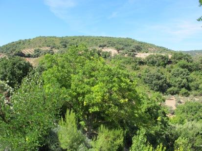 7 walnut tree
