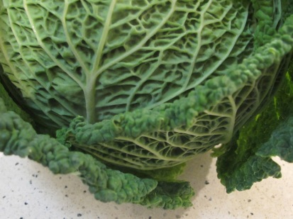 cabbage, whole