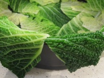 tin, cabbage leaves overlapping2