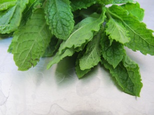 mint, fresh