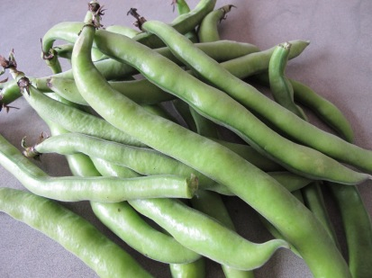 broad beans in pods - photo @Spanish_Valley