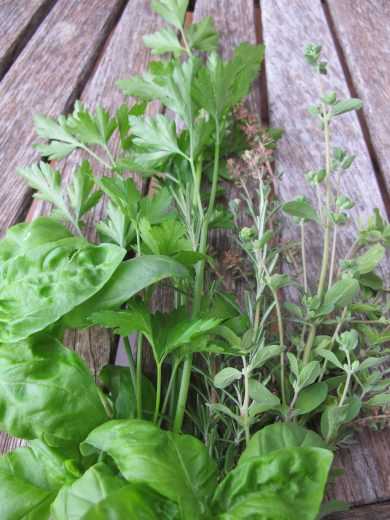 paste - freshly picked herbs