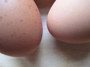 eggs - photo @Spanish_Valley
